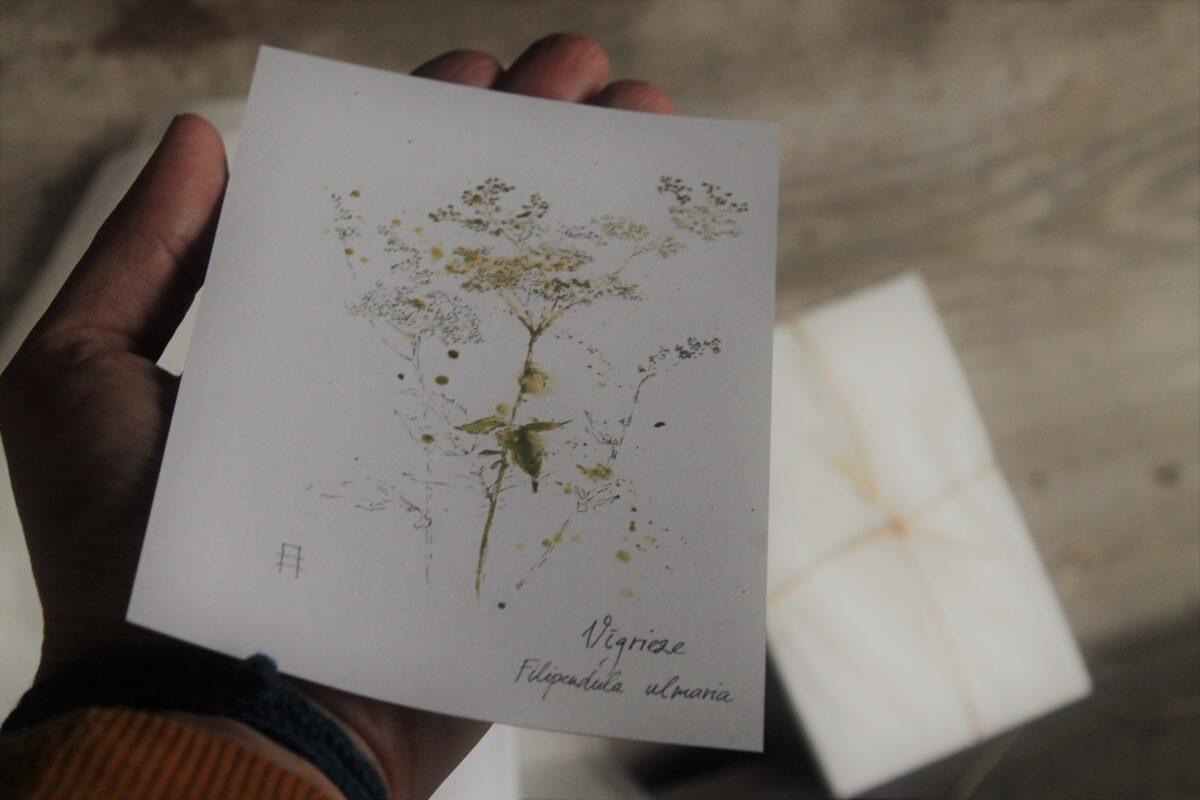 Augu kartiņas - pirmās 7